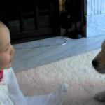 【かわいい!癒し系】赤ちゃんと子犬の初めての出会い