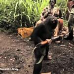 【びっくり!】猿に銃を渡したら乱射!