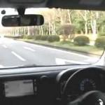 日産キューブ 車両試乗レポート(ササキが行く!)