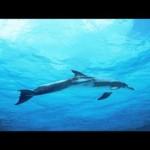 【睡眠用BGM】イルカと海と時々鴎8時間版/勉強・作業用BGM