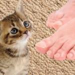 【大爆笑!見ないと損!】飼い主の足の臭いをかいだ猫の反応に大爆笑!