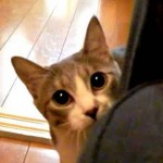 【ワラタ!かわいい!癒し系】だるまさんが転んだをする猫にびっくり!
