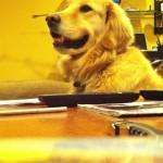 【ワラタ!驚き!】ギターの演奏にノリノリの音楽を楽しむ犬が面白すぎる!