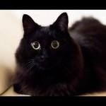 【驚き!ワラタ!】喋る猫との会話が楽しすぎる!