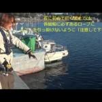 メバル釣りのコツ①数釣りなら係留船周りで決まり!!!!