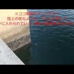 メバル釣りのコツ⑥波止の角は「海底の敷石の範囲」を考える!