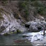 テンカラ釣り 徳島県勝浦川上流