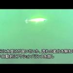 大野ゆうき監修『一口サイズの、まず釣る!ためのルアー』ダイワ/ソラリア85F 水中映像【fimoルアー研究所】