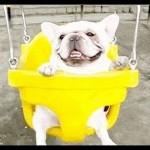 【楽しそう!】ブランコに乗る犬たち!