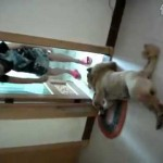 【爆笑!ワラタ!】風呂に入りたくなくて死んだふりをする犬!