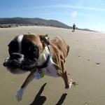 【驚き!】2本足で立って生活する犬!