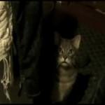 【ワラタ!】猫の鳴き声をおっさんがアテレコ!