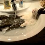 【ワラタ!人間みたい!】お風呂でくつろぐウサギさん!