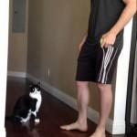 【カワイイ!猫背じゃない!】抱っこされたい猫の姿勢が良すぎて背筋ピーン!