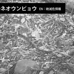 【貴重映像!絶滅危惧種】調査用自動撮影カメラがとらえた!ボルネオの森の野生動物たち!インドネシア東カリマンタンで