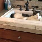 【かわいい!】自分で蛇口をひねって水を飲む猫!