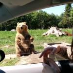 【これは凄い!かわいい!】サファリパークの手を振る熊さんがナイスキャッチ!