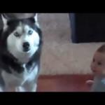【かわいい!】赤ちゃんと犬が仲良くおしゃべり!
