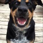 【賢い!】吠えるのと囁くのとを使い分ける犬!