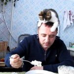 【メチャワラタ!かわいい!】飼い主の頭の上からご飯を狙う猫!