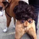 【ワラタ!】ドッグパレードで仮装した犬のお尻!