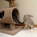 【面白い!】猫とウサギのバトル!