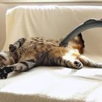 【かわいい!ワラタ!】掃除機で吸われるのが大好きな猫!