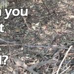【これは凄い!】どこに動物が隠れているか分かるかな?