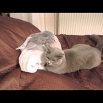 【大ジャンプ!ワラタ!】猫がビニール袋をゴソゴソしたら何と驚くべきハプニングが!?