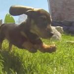 【かわいい!】子犬たちが草原をぴょんぴょん跳ね回る!