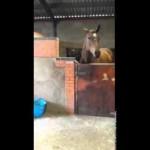 【おもしろい!】音楽にノリノリの馬!