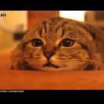 【面白い!ワラタ!】ホラー映画に夢中の猫!
