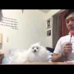 【ワラタ!かわいい!】スイカを食べたくても我慢する犬!