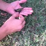 【ポイ捨てはダメ!】落ちていたガムに絡まって飛べないハチドリを救出!