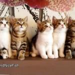 【かわいすぎる!】7匹の猫がシンクロ!