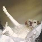 【ちょっと面白い】「世界一の犬は?」と質問されて手(足)を挙げる犬!