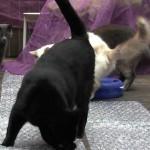 【ワラタ!かわいい!】プチプチに驚く猫ちゃんたち!