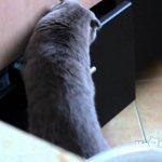 【かわいい!ワラタ】あ、見つかった!という瞬間の猫!