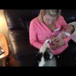 【新しい家族!大喜び!】赤ちゃんに大興奮のハスキー犬!