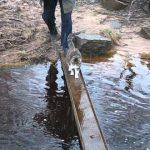 【ワラタ!】絶対に肉球を濡らしたくない猫の橋の渡り方!