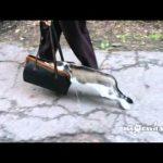 【ワラタ!】初めて外に出た猫が鞄に隠れ中!