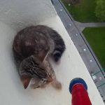 【ハラハラドキドキの救出劇!】ビルの12階の窓の外で今にも落ちてしまいそうな子猫を救え!