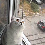【ワラタ!】置物のように固まった猫!