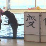 【茨城県大洗町磯浜町アクアワールド大洗水族館】カリフォルニアアシカ「ゴエモン」が今年の漢字「変化」を筆で書いた!