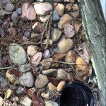 【ワラタ!】排水口に落ちたヒヨコの助け方!