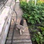 【これはびっくり!】犬が猫を家に連れて帰る方法!