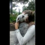 【5日間で再生数2500万回突破!】2年ぶりの再会に感激して失神した犬!