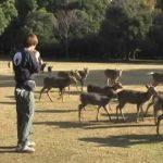 【奈良公園!】ホルンを吹いて鹿を集める奈良の冬の風物詩!
