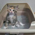 【ワラタ!】子猫がふんばってからピーン!