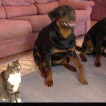 【お見事!】犬といっしょに芸をする猫!